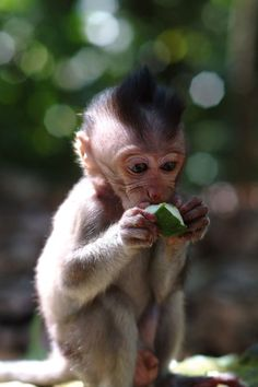 A Macaque  Baby Orphan in Close Up Photo by Hiro Kurashina -- National Geographic Your Shot