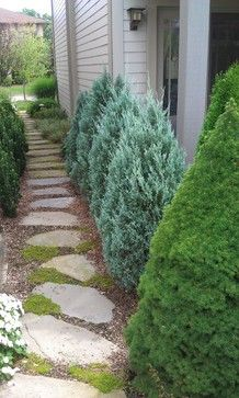 Spruce Trees Design Ideas, Pictures, Remodel, and Decor - page 9