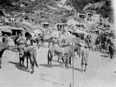 Mules and shell proof shelters, Gallipoli, Photographer unidentified. Inscriptions: Verso - Giving good view of the way the boys make their . Turkey History, Ww1 History, Military History, Triple Entente, Gallipoli Campaign, Ww1 Photos, Anzac Day, Lest We Forget, International Day