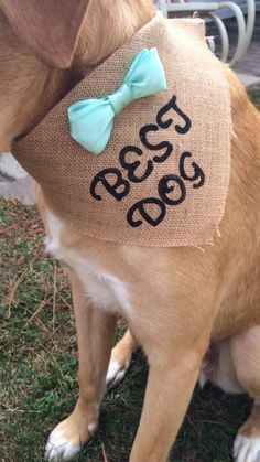 Just for the fury ring bearer!  Choose your wedding color This wedding bandana is fixated on white wedding ribbon for a comfortable fit for your furbaby. Burlap bandana is accented with your choice color bow tie and the words best dog hand stamped . Please include choice of color in note to seller upon checkout . Small Dogs 5-30 lbs. Approx. 10 across tip to tip by 7 in long.  Medium/Large Dogs 30 lbs. and up. Approx. 14 in across by 10 long.  X-Large Dogs 80 lbs and up. Approx. 15 across…