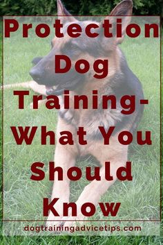 Training a dog for protection isn't something your average homeowner should take on. But if you really want to do so, here are a few things you should know. >>> More info about pet dogs could be found at the image url.