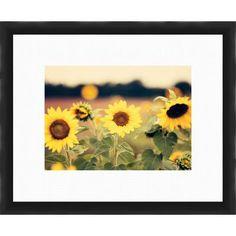 PTM Images Sunflower Giclée Framed Photographic Print