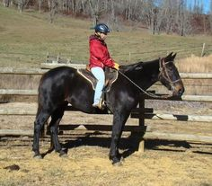 Dolly is an adoptable Standardbred Horse in Mouth Of Wilson, VA Beautiful Dolly is sweet and ready for a new home, currently at our boarding facility in Virgin ... ...Read more about me on @Petfinder.com.com.com