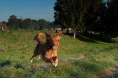 Alfie enjoying the grounds at Stapleford Park