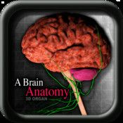 A Brain Anatomy Organ vi by Medical - In you can see the A Brain Anatomy from all angles, digitized, with each of its parts. Touching the pins, to obtain specific information, and focused on that part of the A Brain Anatomy. Brain Anatomy, Teaching Aids, App Store, Angles, Ios, Medical, Study, Activities, Facebook