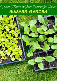 If like me, you are getting itchy to get in the garden and start planting, you can still start some plants inside for your summer garden!