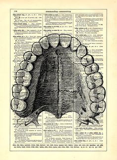Dental Anatomy Teeth Book Upcycled Dictionary Art Vintage Book Print Recycled Vintage Dictionary Page Buy 2 Get 1 FREE. $6.99, via Etsy.