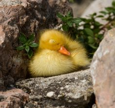 Between a rock and a hard place... and taking a nap