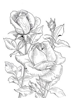 Malowanie na jedwabiu Beautiful Flower Drawings, Flower Line Drawings, Flower Sketches, Outline Drawings, Rose Coloring Pages, Adult Coloring Book Pages, Coloring Books, Floral Drawing, Fabric Painting