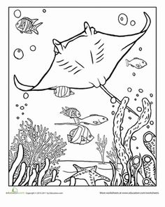 Manta Ray Coloring Pages Detail - Bing images Cute Coloring Pages, Adult Coloring Pages, Coloring Sheets, Coloring Books, Ocean Coloring Pages, Animal Coloring Pages, Mandala Coloring, Ocean Crafts, Fish Crafts