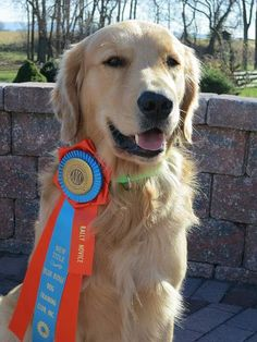 This guy has a Rally Novice ribbon! It's one of my goals for Willow to get to this title.