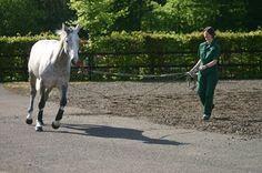 Limitations and Advances in Lameness Assessment By Alexandra Beckstett, The Horse Managing Editor