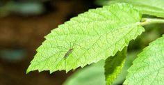 Aprende como puedes elaborar tu mismo un repente natural para insectos, efectivo…