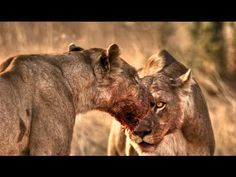 National Geographic - Wild Brutal Killers.720p - http://movies.chitte.rs/national-geographic-wild-brutal-killers-720p/