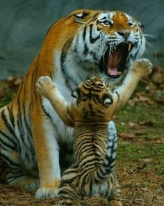 """about_animalslife: """"Let's play mom! Please! #About_animalslife"""""""
