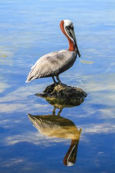 Reflections by Linda Martin on 500px