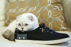 Taylor Swift's Cat Olivia Benson Is a Keds Shoe Model—See the Photo! Taylor Swift, Cat, Olivia Benson, Keds