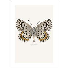 Butterfly Liljebergs