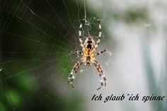 Illustration, Animals, Pictures, Artist Canvas, Animal Themes, Digital Art, Canvas Frame, Spider, Animales
