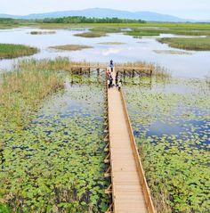 Efteni gölü/Gölyaka/Düzce/// Efteni Gölü, Düzce ili sınırlarında, Merkez ve Gölyaka ilçe sınırlarında yer alan, tektonik oluşumlu, tatlı su gölü. Düzce merkezin 10 km güney doğusu, Gölyaka merkezin 2 km doğusunda yer alır.
