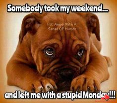 Dogs And Puppies Puppy Photo Puppy. Dogs And Puppies Pics. Funny Animal Memes, Animal Quotes, Funny Animal Pictures, Funny Animals, Funny Good Morning Quotes, Funny Quotes, Funny Memes, Monday Morning Humor, Memes Humor