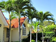www.palmtreepassion.com  A row of Christmas palm trees