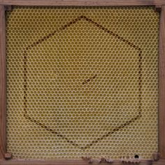 Bee Keeping, Album Covers, Coding, Rugs, Shop, Decor, Farmhouse Rugs, Decoration, Decorating