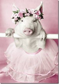 This is a pig in a tutu on the barre! First tendu's then this pig will be doing pointe! Lol, I can we the choreographer. Cute Baby Pigs, Cute Piggies, Cute Babies, Animals And Pets, Baby Animals, Funny Animals, Cute Animals, This Little Piggy, Little Pigs