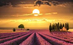 Sunset over Lavender fields in Tuscany Nature Landscape Scenery Poster Art Silk Fabric Wall For Home Decoration Print Picture Field Wallpaper, Sunset Wallpaper, Widescreen Wallpaper, Beautiful World, Beautiful Places, Beautiful Pictures, Beautiful Sunset, Church Pictures, All Nature