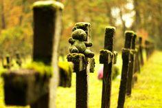 Cemetery of the Insane ©VLP - Velvet Lies Productions Teddybear, Urban Exploration, Crosses, Cemetery, Decay, Belgium, Abandoned, Rain, Velvet