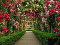 Арка, увитая розами – пожалуй, самый романтичный элемент сада. Для ее создания используют плетистые цветы, которые красиво обвивают опору, правда сами цепляться за нее розы не могут, поэтому придется их подвязывать. Такие арки придадут саду некую воздушность и сказочность, сделают его более уютным. Кроме того, с помощью этого элемента можно интересно разбить участок на отдельные зоны.