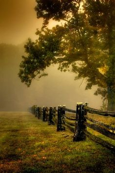 Fog on the pasture fields