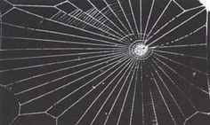 NETS  MADE  BY  SPIDERS  FED  ON  DRUG-DOSED  FLIES, TALK ABOUT SPIDER ON LSD..