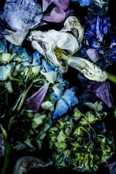Fading floral images by Trine Hisdal | http://www.daisylovesdesign.com