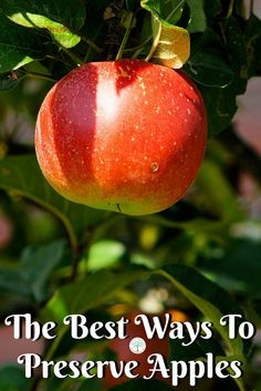 Preserving apples in season is a great way to have delicious fruit on hand all the time! Here are some of the best ways to preserve apples. The Homesteading Hippy via @homesteadhippy