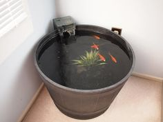 Indoor Goldfish Container Pond - YouTube