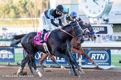 Shared Belief Remembered through Photos - Runnin' Down A Dream - Horse Racing Nation