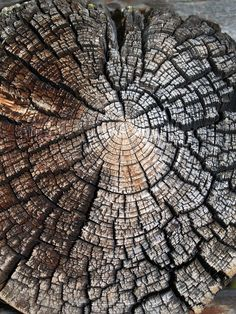 Free Image on Pixabay - Wood, Nature, Texture, Tree, Old Tree Patterns, Wood Patterns, Patterns In Nature, Wood Wallpaper, Textured Wallpaper, Textured Background, Natural Forms, Natural Texture, Concrete Art