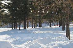 Its Winter by William Norton
