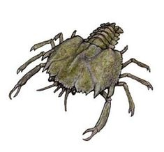 Eryon is a prehistoric crab from the Late Jurassic period of Germany. It was about 10 cm long and may have fed on particulate matter on the seafloor. Prehistoric Wildlife, Prehistoric World, Prehistoric Creatures, Monster Art, Monster Hunter, Creature Feature, Creature Design, Fantasy Creatures, Mythical Creatures