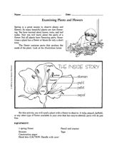 Examining Plants and Flowers Printable (1st - 6th Grade) - FamilyEducation.com
