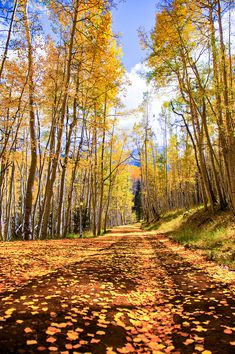 Yellow dirt road (near Ridgeway, Colorado) by Wayne Boland