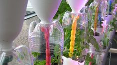 Vertikální zahrada z lahví