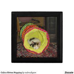 Calico Kitten Napping Gift Box