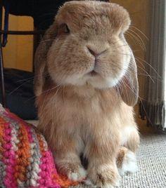 Rambo bunny!