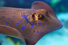 Tier, Aqua, Aquarium, Bunte - Kostenloses Bild auf Pixabay