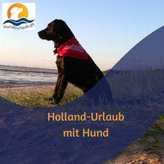 Hundeurlaub Ostsee Urlaub Mit Hund Hundeurlaub Hundefreundlich Niederlande Holland Ferienhaus Ferie Urlaub Mit Hund Ferienhaus In Holland Ferien Mit Hund