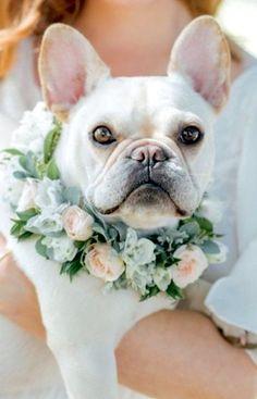French Bulldog at the Wedding ❤️ @yogafrenchie on Instagram