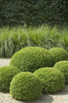 Planting layering - With height, form and texture - tips from Jo-anne.