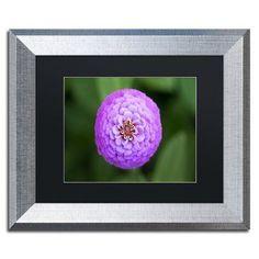 "Trademark Global 'Purple Flower' by Jason Shaffer Framed Photographic Print Matte Color: Black, Size: 16"" H x 20"" W x 0.5"" D"